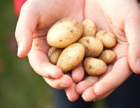 Slovenské zemiaky a iné produkty nájdete v Lidli.
