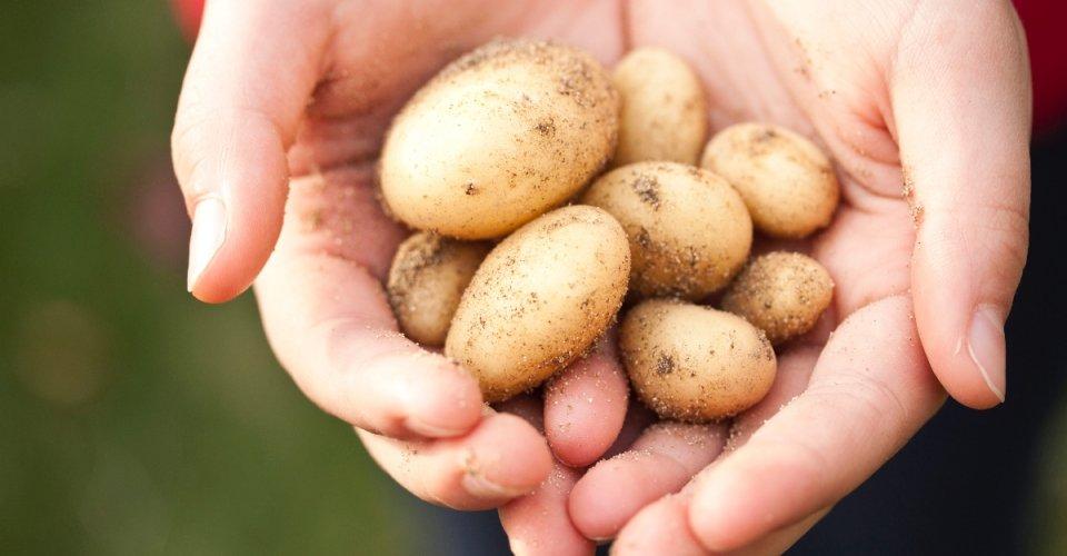 Slovenské zemiaky a iné produkty nájdete vLidli.